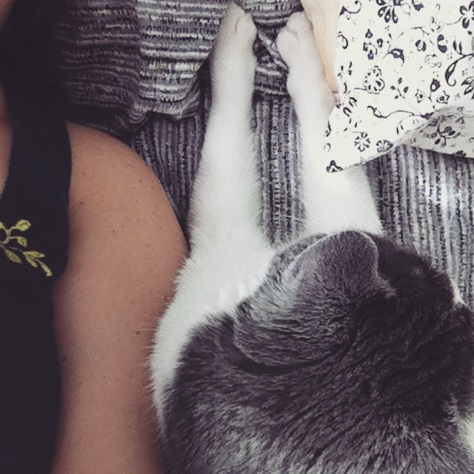 Mme Mousteille, ma chatte, ma plus précieuse alliée dans les durs moments. Réconfortante et pleine d'amour.
